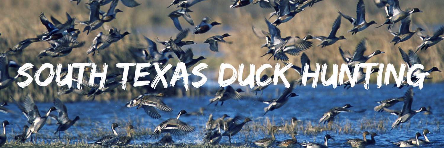 south-texas-duck-hunting