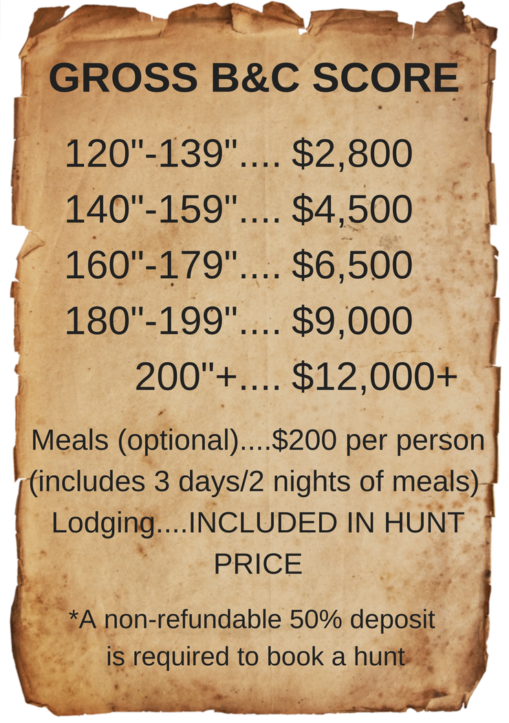 whitetail deer prices